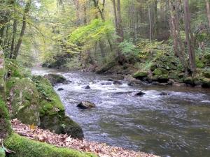 Wiese (Schönau)