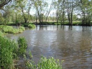 Viele Versteckmöglichkeiten für Fische - vielfältige Herausforderungen für Angler!